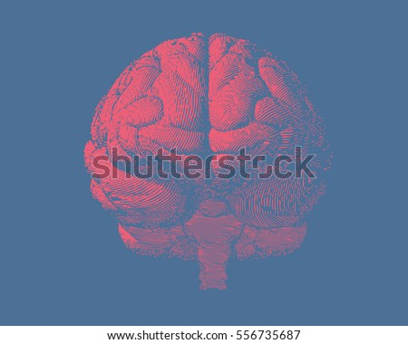 Pink engraving brain illustration in front view on light blue background