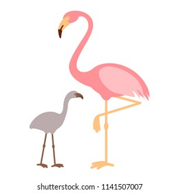 Pink Flamingo with baby flamingo, isolated vector illustration