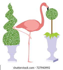 Pink Flamingo between two potted topiary bushes