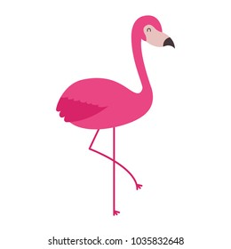 pink flamingo bird exotic image