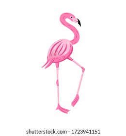 Pink flamingo character flat cartoon vector illustration isolated on white background. Exotic beautiful african bird icon for summer prints and decoration.