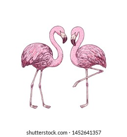 Pink flamingo engraved illustration. Beautiful design print. Vector illustration