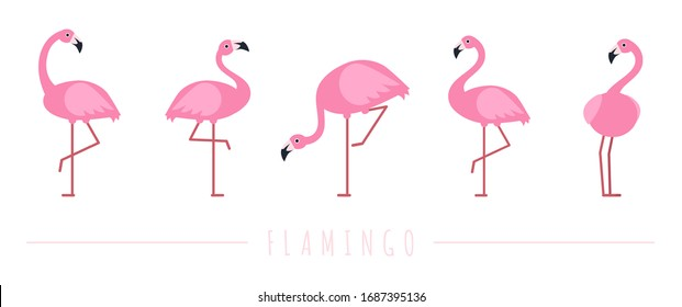 Pink flamingo. Exotic tropical birds characters. Isolated wildlife animals vector set