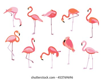 Pink flamingo set, vector illustration. Cool exotic bird in different poses decorative design elements collection. Isolated on white background