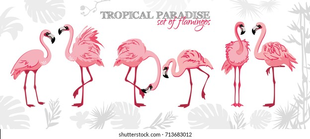 Pink flamingo set, vector illustration. Exotic flamingo bird in different poses decorative design elements collection. Pink flamingo isolated on white background