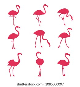 Pink flamingo silhouetes isolated on white background. Vector bird tropical, animal exotic wildlife collection illustration