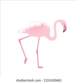 Pink flamingo stands on thin legs on a white background