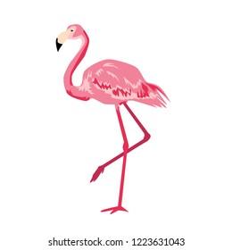 pink flamingo vector.