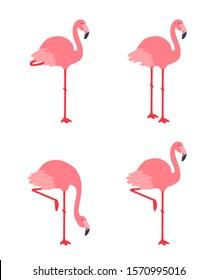 Pink flamingo. Vector illustration set isolated on white background.