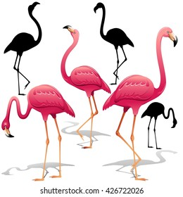 Pink Flamingos Vector illustration. Isolated Decorative design elements. Exotic Bird. Flamingo Shapes.