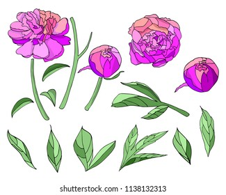 Flower drawing images stock photos vectors shutterstock pink flower peony elements set vector isolated elements flowers leaf stems on mightylinksfo