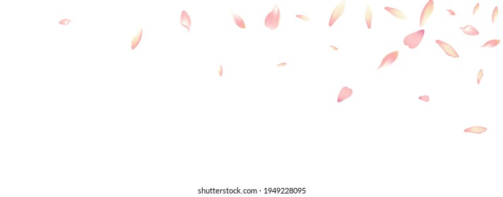 Pink Flower Petal Vector White Background. Pastel Flying Apple Petal Banner. Sakura Petal Spring Backdrop. Springtime Peach Petal Pattern.