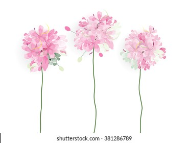 pink flowers on white background,vector illustration