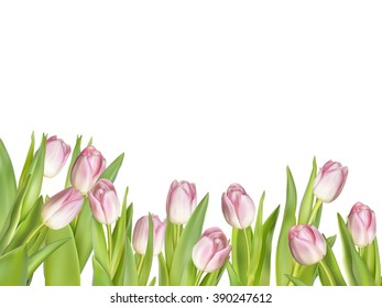 Pink fresh tulips on white. EPS 10 vector file included