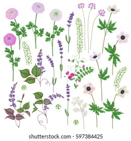 Pink and lilac flowers set. Buttercup, anemone, lavender isolated on white.