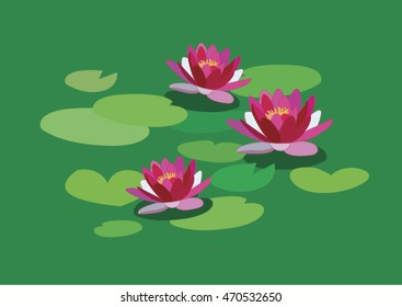 pink lily on the water