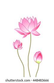 pink lotus flowers, vector illustration