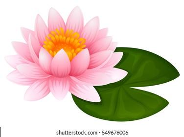 Pink lotus on green leaf illustration