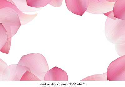 pink lotus in soft color petals frame with white background