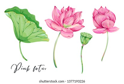Pink lotus, tropical flowers, green leaf, water lily set collection. Vector gentle botanical illustrations for greeting card, wallpaper. Decorative beauty floral elements isolated
