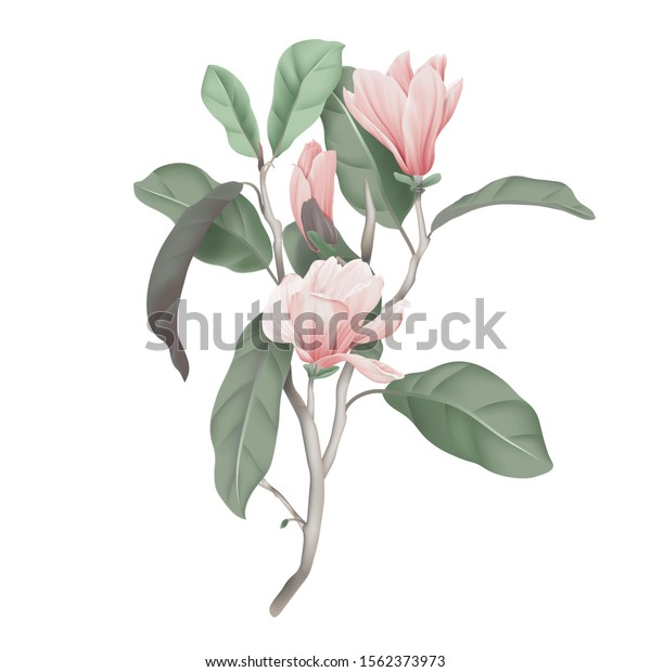 Pink magnolia flowers with leaves on branch