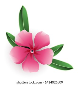 Pink nerium oleander flower with leaves isolated on white background. Vector illustration