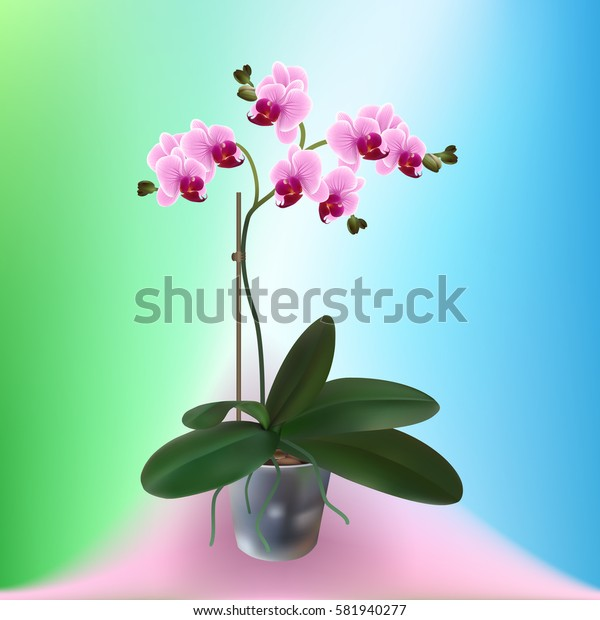 Pink Orchid flower in a flowerpot on a colored background