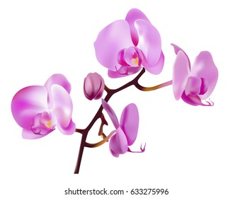 Pink orchid flowers isolated on white background. Vector illustration.