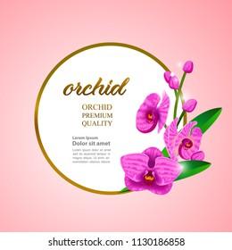 Pink Orchid master vector illustration