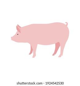 Pink pig vector illustration. Minimalistic illustration of mature domestic pig. Agriculture, animal husbandry, breeding, farming concepts.