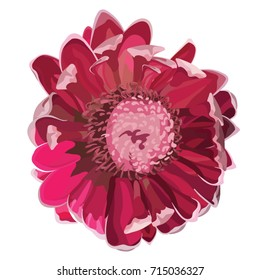 Pink Protea Front View Realistic Vector illustration