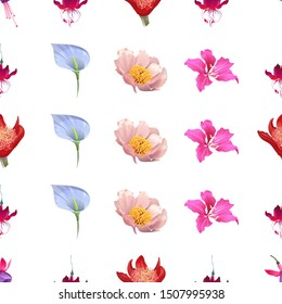 Pink and Purple Fuchsia Bella. Red Fuchsia. Red Haemanthus Blood Lily. Blue Anthurium Tailflower. Pink Peony. Pink Bauhinia Purpurea. Vector illustration. Seamless background pattern. Floral.