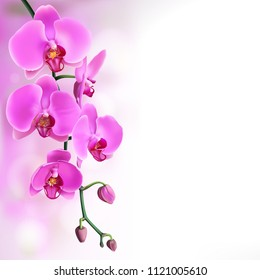 Pink purple orchids flowers on left purple gradient with bokeh background. Vector illustration of realistic orchids flowers in branch isolated.