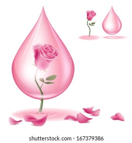 A pink rose and  rose oil. Dripping of rose essential oil.  File contains transparencies and Gradient Mesh. File is layered with global colors.