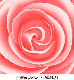 pink rose vector illustration, rose close up