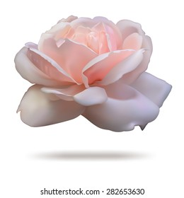 Pink rosebud isolated on white background in vector format.