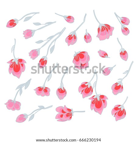 Pink Sakura blossom - separate flowers and buds on a white background - Japanese flowering cherry