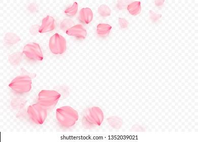 Pink sakura falling petals vector background. 3D romantic illustration. Transporent banner with sakura