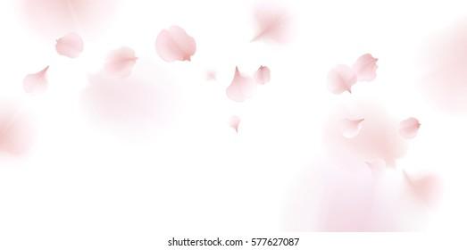 Pink sakura falling petals vector background. 3D romantic illustration