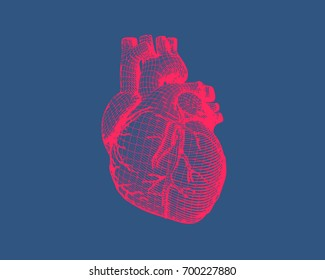 Pink stylized wireframe human heart isolated on dark blue background