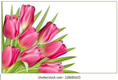 Pink tulip with green leaves. Gift frame. Vector illustration.