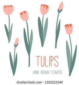 Pink tulips set. Spring or summer graphic design. Floral vector collection. Hand drawn simple flowers. Modern and original elements. Garden. Botany illustration