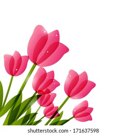 Pink tulips  for Your design