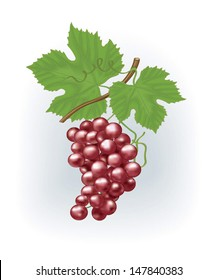 pink vector grapes