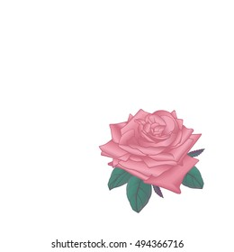 Pink vector rose on white background, isolated.