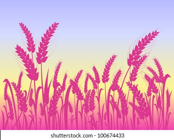 Pink Wheat Silhouettes at Field with Light Blue Sky. Vector Illustration