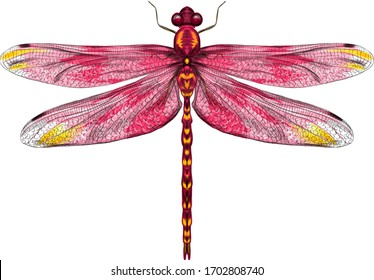 pink yellow dragonfly with delicate wings vector illustration