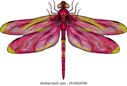 pink and yellow dragonfly with delicate wings vector illustration