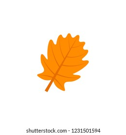 pinnatifid oak leaf flat icon on transparent background