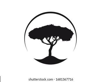 Pinus Pinea Mittelitalien Umbrella Pine tree Vektorillustration Symbol im Kreis